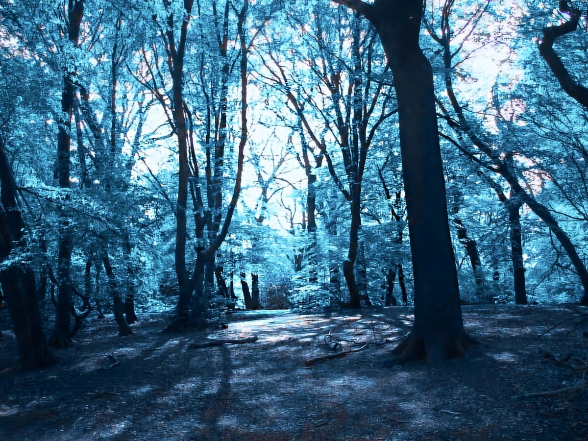 Highgate Wood Blue