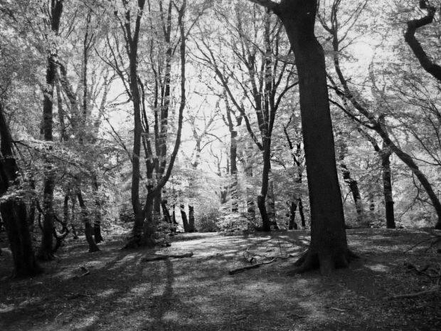 Highgate Wood B+W