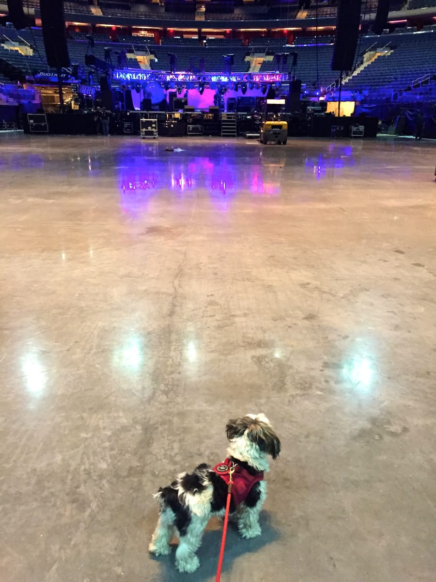 Georgie Girl inspecting the stage
