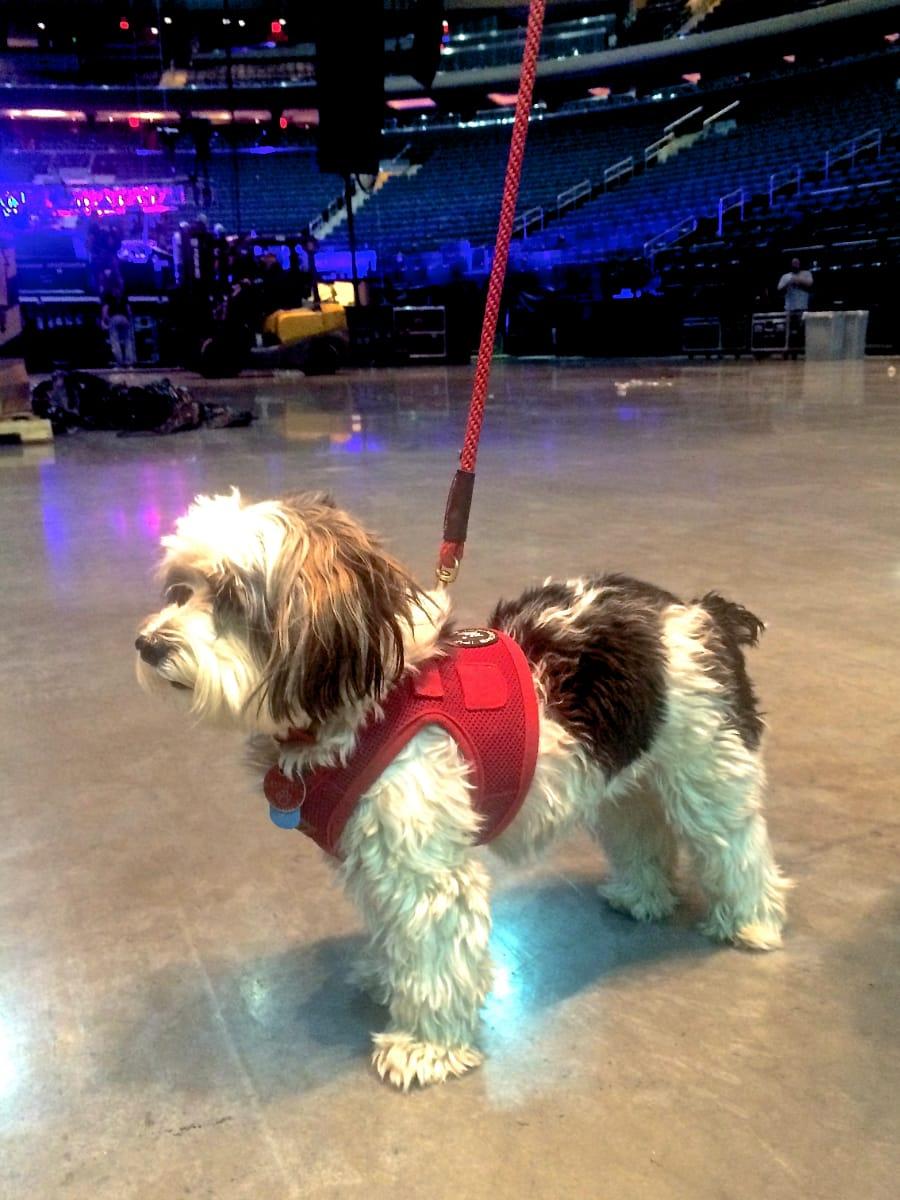 Georgie Girl patrols the arena